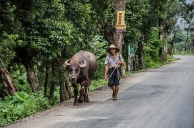 Der alte Mann und der Büffel