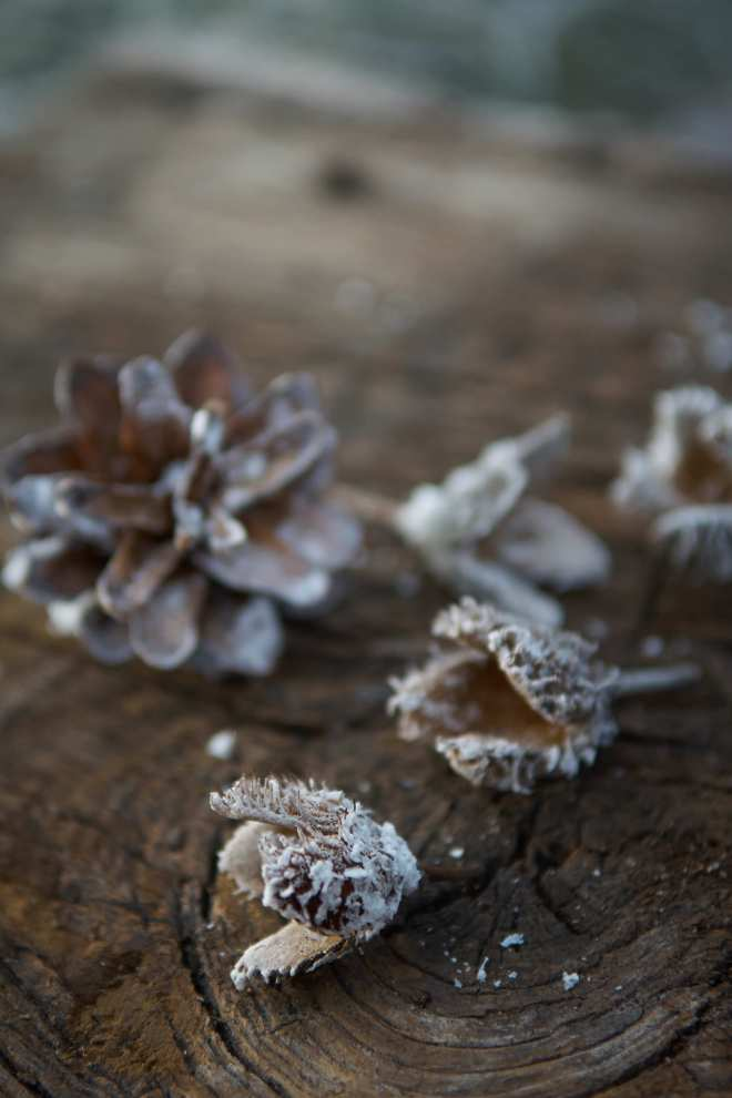 Frosted_pinecones_diy_bjorkasa_winter 2