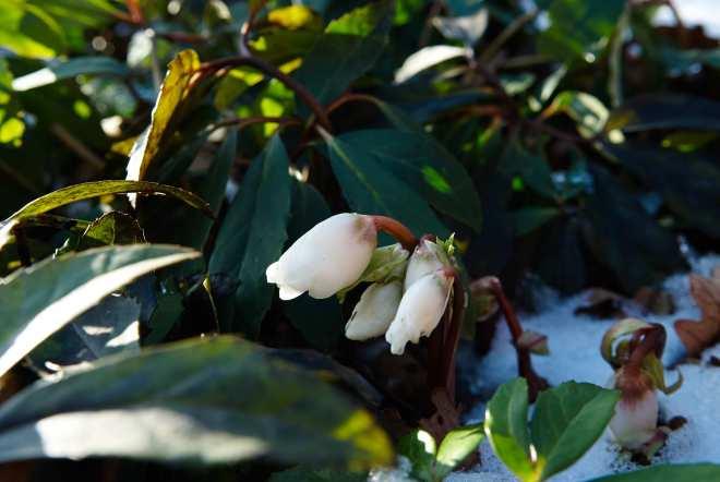 Bjorkasa_spring_garden_flowers 1