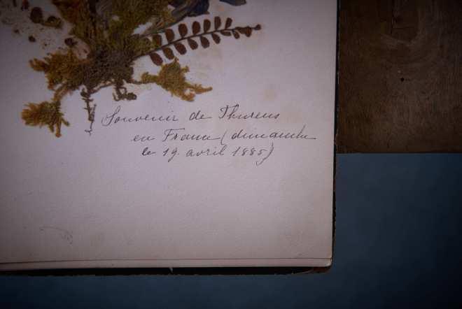 Helenes_herbarium_wild_flowers 1