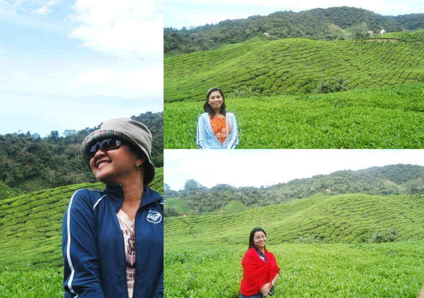 Solo Pictures at Cameron Highlands