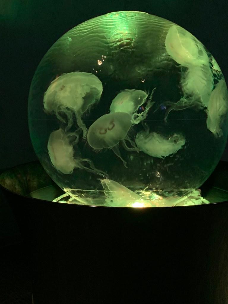 zoo: jellyfish in illuminated globe