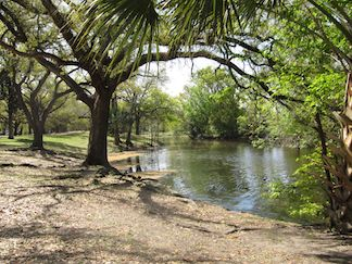 A cool, cool shade in Audubon Park in New Orleans.