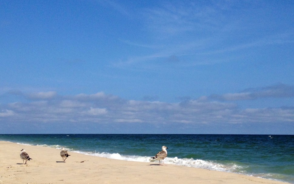 The Atlantic Ocean from Cherry Grove, Fire Island. Photo by Rick Stachura. August 21, 2014.