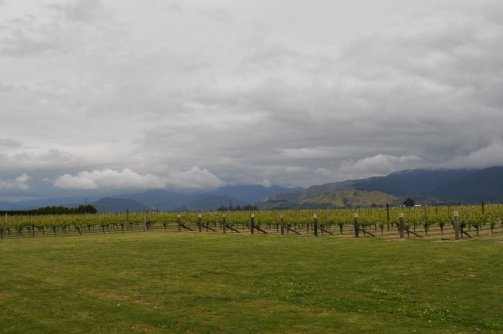 Brancott Estate Marlborough vineyards