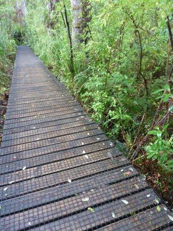 Waipoua Kauri Forest boardwalk