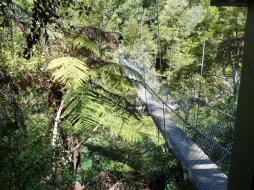 Abel Tasman forest walk bridge