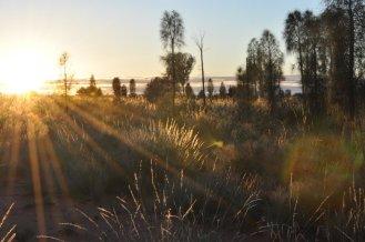 Aussie bush at dawn