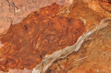 Fossilised sea shell