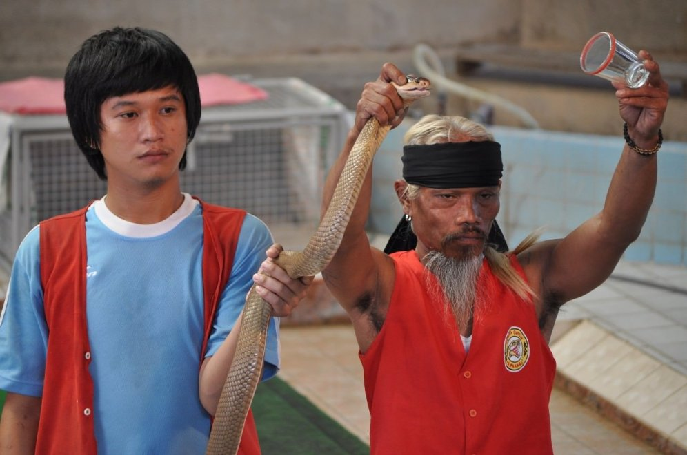 Crazy poisonous snake wrestlers