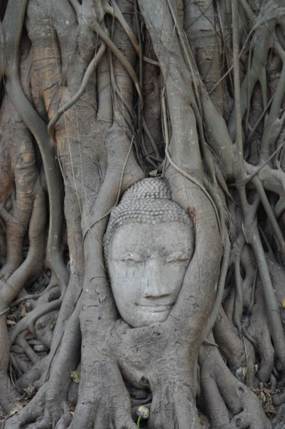 Statue smothered by tree roots