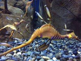 Georgia Aquarium