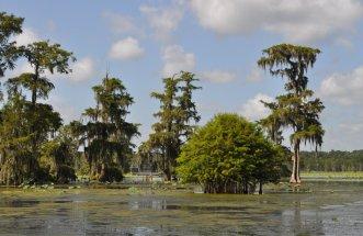 cajun swamp tour 2