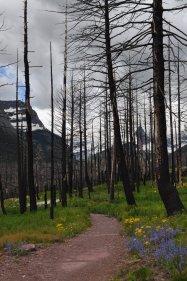Glacier National Park 28