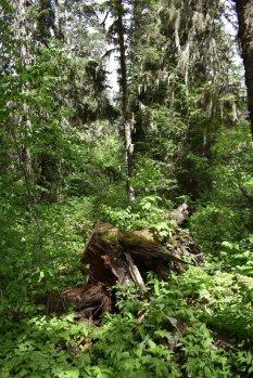 Glacier National Park 65