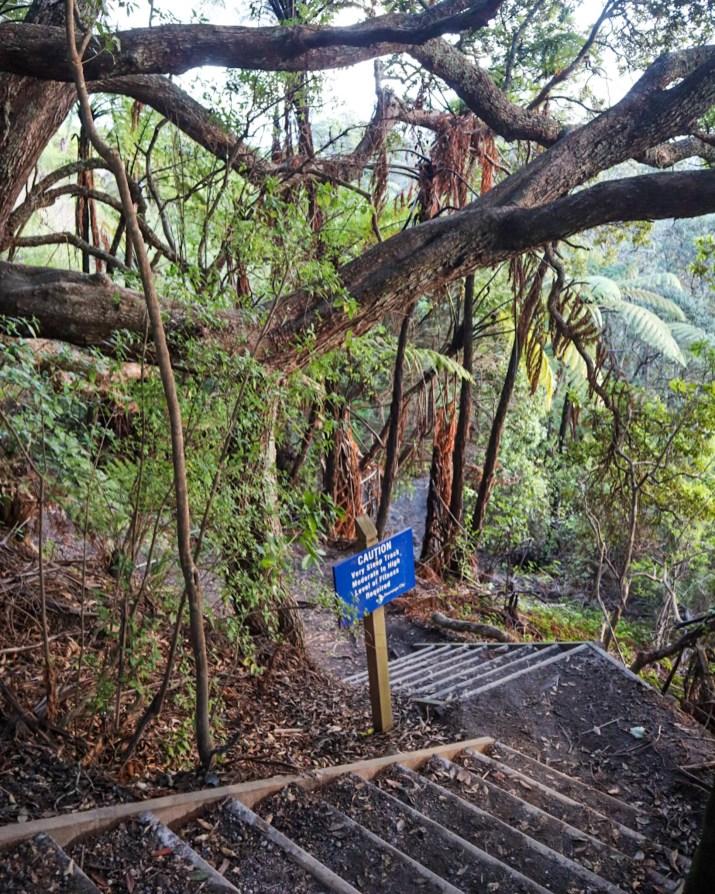 Maunganui Hiking Trail