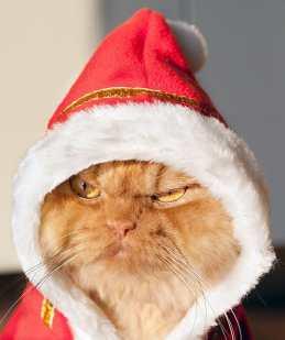festive-pets4