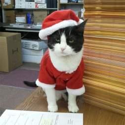 festive-pets9