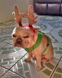 festive-pets3