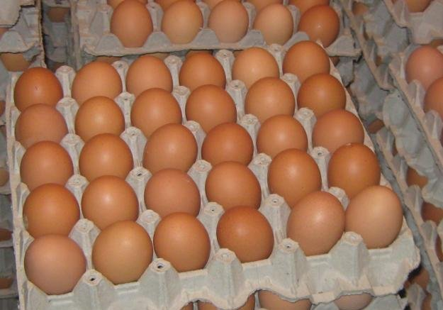 carton-de-huevos
