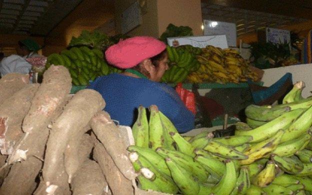 plátanos y yuca