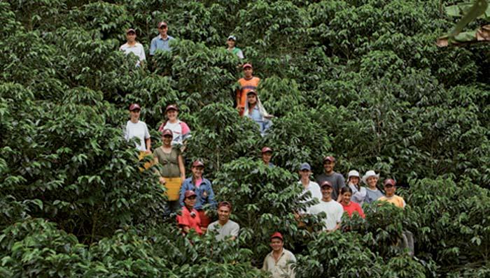 Venezolanos-recolectan-café-en-Colombia