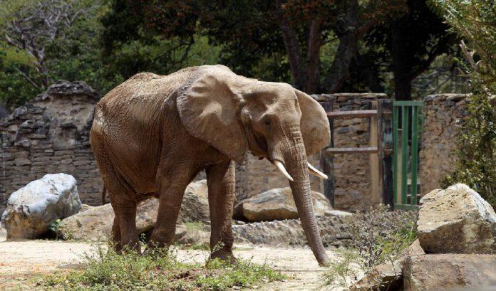 murió elefante del parque caricuao