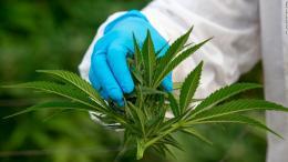 marihuana-medicinal-tailandia