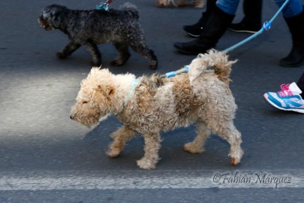 marcha perros peligrosos-4