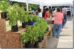 FOTO apertura mercado agroecológico 1