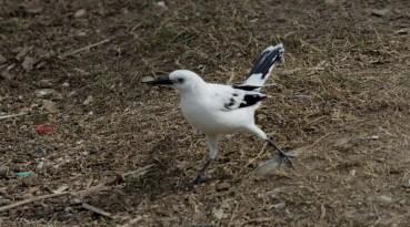 Investigan anormalidades pigmentarias de aves de Tamaulipas.