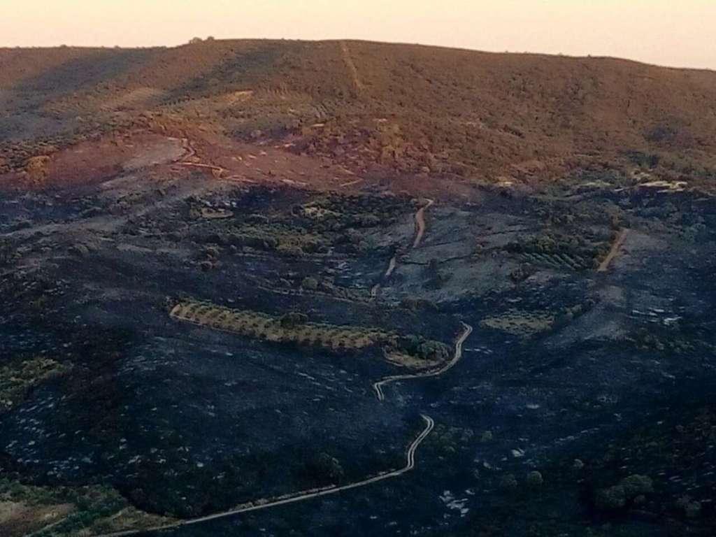 El-Infoex-participa-durante-esta-semana-en-33-incendios-forestales-afectando-a-187-hectareas
