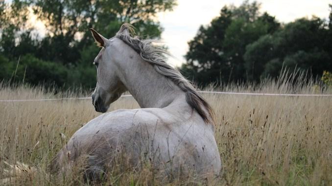 horse-905534_1280