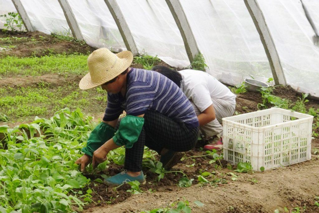 Trabajo irregular, vidas precarias
