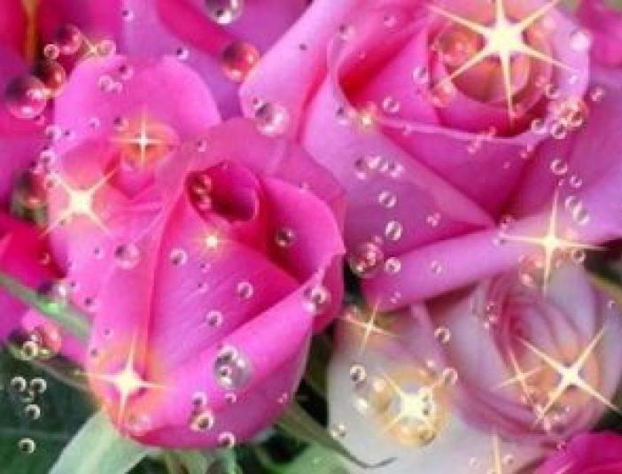 rosas71