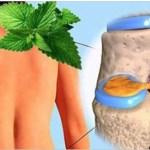 O hortelã regenera a cartilagem do quadril e joelho, mas somente dessa maneira é mais eficaz do que qualquer outra coisa. Aprenda!