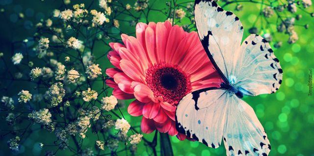 flores-e-borboletas-branca-com-detalhes-azul