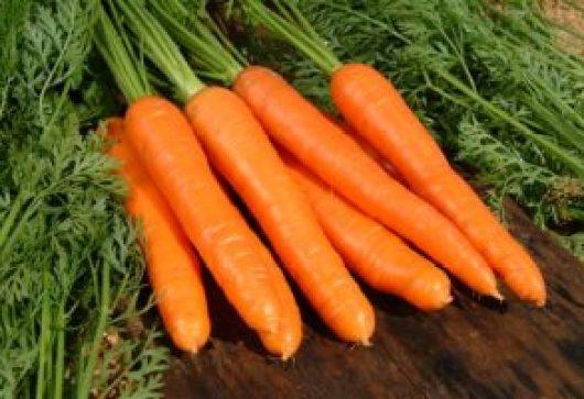 Cenoura2