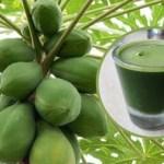 3 maneiras de usar o suco da folha do papaia para desintoxicar o fígado, inverter o fígado gordo e tratar o câncer do fígado.