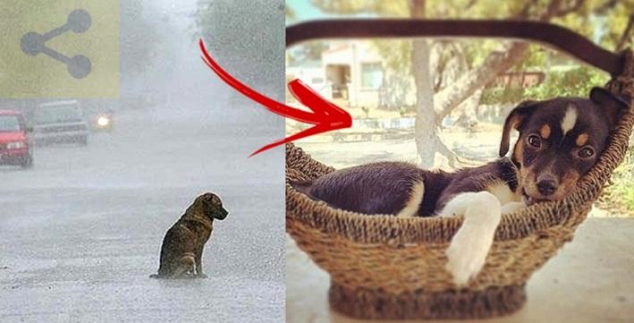 Mulher adota cadelinha que era sempre devolvida ao abrigo, logo ela descobre que ela não é um cão normal