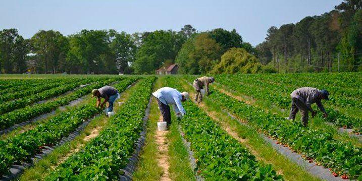 oferta de empleo trabajador agrícola