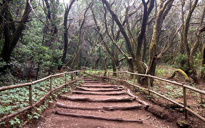 El Parque Nacional de Garajonay recibirá 2,1 millones de euros