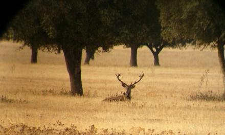 Ecologistas recorren Cabañeros para denunciar los cotos de caza