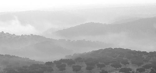 REE y Extremadura activan plan de reforestación en el Monfragüe