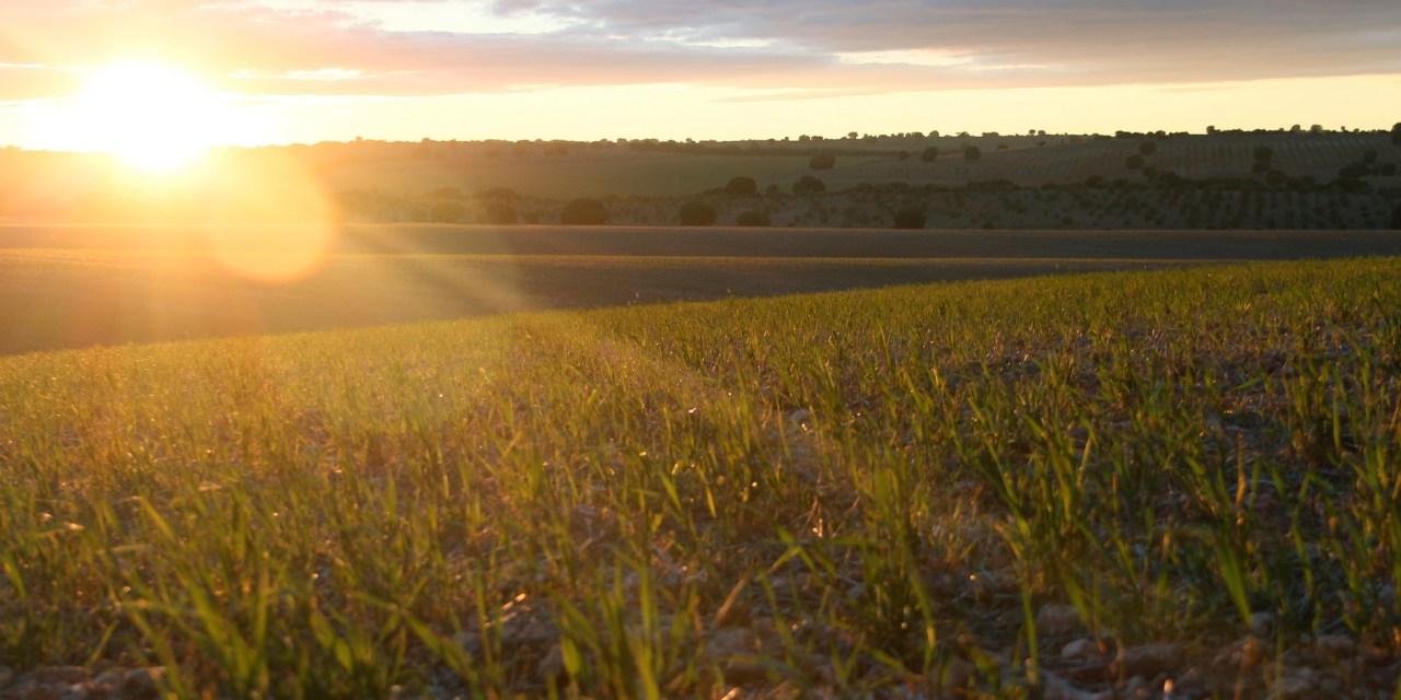El medio rural de Castilla- La Mancha, desatendido según Ecologistas