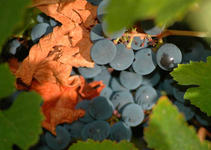 El Vino DO Bierzo se alía con el cocido Maragato