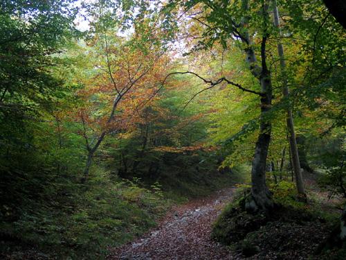 Lario organiza la «Monte Ranedo Trail»