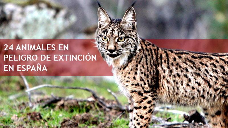 24 Animales en peligro de extinción en España