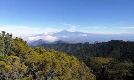 El turismo rural de Canarias desciende un 2,7% en enero