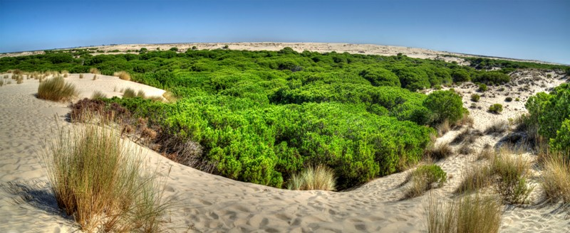 El Parque Nacional de Doñana promocionado en la Feria Ecoturismo Doñana Natural Life